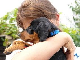 kind bekommt hund geschenkt